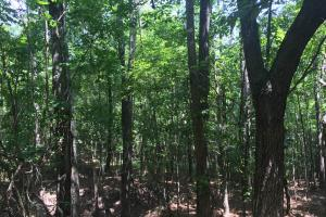 Beautiful Timber Land/Recreational Property & Cabin in Holmes, MS (54 of 56)