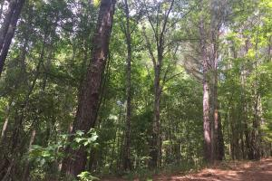 Beautiful Timber Land/Recreational Property & Cabin in Holmes, MS (49 of 56)