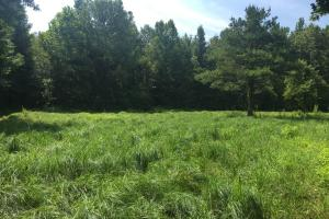 Food Plot Site (24 of 56)