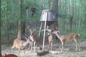 Feeder with Bucks (16 of 56)