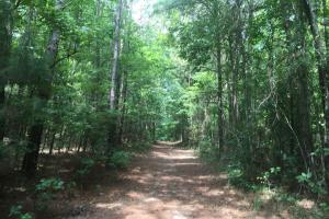 Beautiful Timber Land/Recreational Property & Cabin in Holmes, MS (51 of 56)