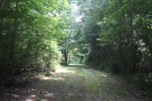 Beautiful Timber Land/Recreational Property & Cabin in Holmes, MS (34 of 56)