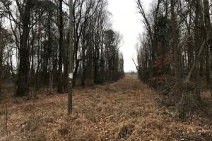 Brown Marsh Hunting Land in Bladen, NC (11 of 21)