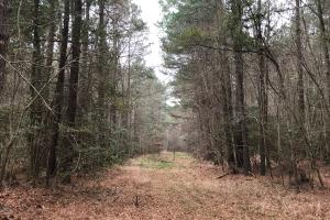 Brown Marsh Hunting Land in Bladen, NC (17 of 21)