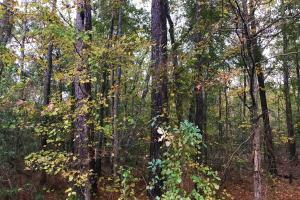 Williston Timber Investment - Barnwell County SC