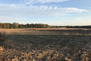 Greenville Development Land - Greenville County SC