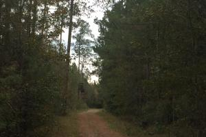 Samuel Road Timber Tract in Horry, SC (14 of 28)