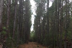 Samuel Road Timber Tract in Horry, SC (21 of 28)