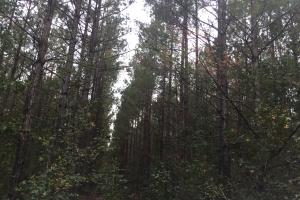 Samuel Road Timber Tract in Horry, SC (15 of 28)