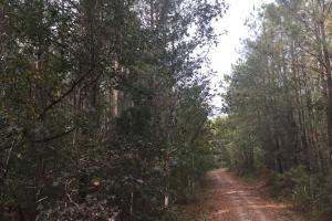 Samuel Road Timber Tract in Horry, SC (28 of 28)