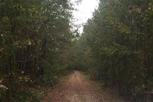 Samuel Road Timber Tract in Horry, SC (9 of 28)