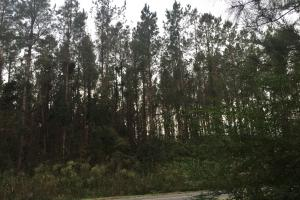 Samuel Road Timber Tract in Horry, SC (4 of 28)