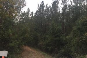 Samuel Road Timber Tract in Horry, SC (10 of 28)