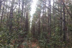 Samuel Road Timber Tract in Horry, SC (25 of 28)