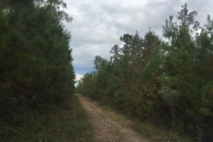 Samuel Road Timber Tract in Horry, SC (26 of 28)