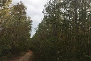 Samuel Road Timber Tract in Horry, SC (27 of 28)