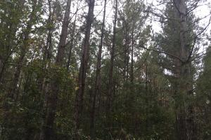 Samuel Road Timber Tract in Horry, SC (12 of 28)