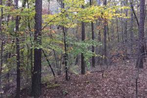 Pleasant Valley Road Homesite and Timber Tract in Saint Clair, AL (9 of 12)
