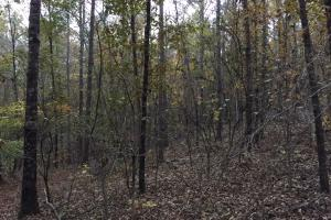 Pleasant Valley Road Homesite and Timber Tract in Saint Clair, AL (8 of 12)