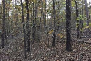 Pleasant Valley Road Homesite and Timber Tract in Saint Clair, AL (7 of 12)