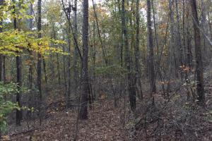 Pleasant Valley Road Homesite and Timber Tract in Saint Clair, AL (10 of 12)