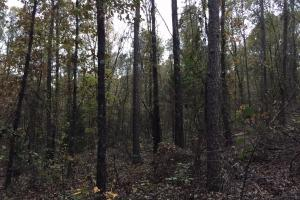 Pleasant Valley Road Homesite and Timber Tract in Saint Clair, AL (2 of 12)