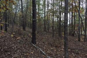 Pleasant Valley Road Homesite and Timber Tract in Saint Clair, AL (3 of 12)