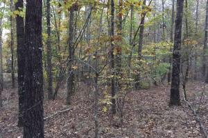 Pleasant Valley Road Homesite and Timber Tract in Saint Clair, AL (4 of 12)