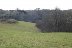 <p>View toward back of farm, perfect deer habitat</p>