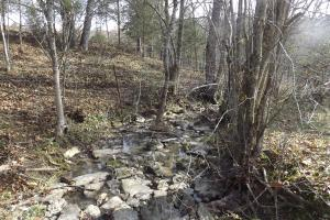 <p>Creek drains along north boundary, perfect feeding and bedding areas for deer.</p>
