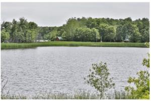 Ag Land; Investment Opportunity; Lakeshore; Hunt; Fish; Hike - I94/Hwy 65,  WI:  Cross Creek Cutback Ranch has water -- pond to the west; West Twin Lake to the east and 2700' of lakeshore! (15 of 15)