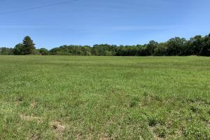 Ramsey Road Farm Tract - Mobile County AL