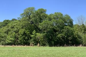 Ramsey Road Farm Tract in Mobile, AL (3 of 9)