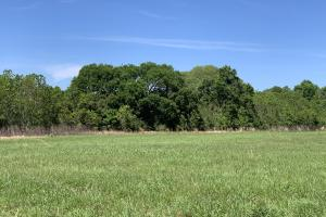 Ramsey Road Farm Tract in Mobile, AL (6 of 9)