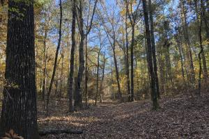 Sofkahatchee Creek Timber and Rec Tract in Elmore, AL (4 of 36)