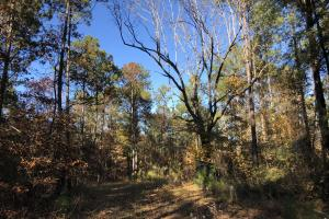 Sofkahatchee Creek Timber and Rec Tract in Elmore, AL (18 of 36)