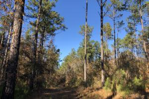 Sofkahatchee Creek Timber and Rec Tract in Elmore, AL (22 of 36)