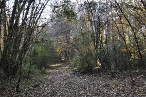 Sofkahatchee Creek Timber and Rec Tract in Elmore, AL (28 of 36)