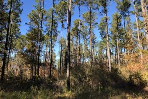 Sofkahatchee Creek Timber and Rec Tract in Elmore, AL (2 of 36)