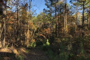 Sofkahatchee Creek Timber and Rec Tract in Elmore, AL (8 of 36)