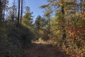 Sofkahatchee Creek Timber and Rec Tract in Elmore, AL (35 of 36)
