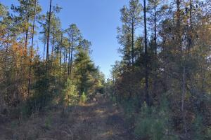 Sofkahatchee Creek Timber and Rec Tract in Elmore, AL (25 of 36)