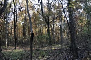 Sofkahatchee Creek Timber and Rec Tract in Elmore, AL (12 of 36)