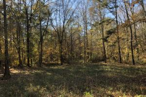 Sofkahatchee Creek Timber and Rec Tract in Elmore, AL (19 of 36)
