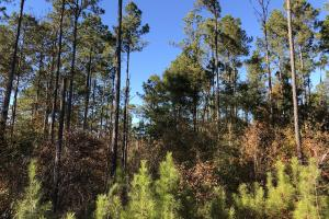 Sofkahatchee Creek Timber and Rec Tract in Elmore, AL (31 of 36)