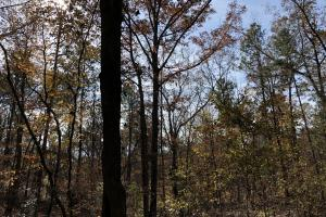 Sofkahatchee Creek Timber and Rec Tract in Elmore, AL (13 of 36)