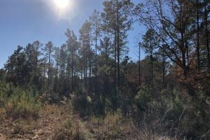 Sofkahatchee Creek Timber and Rec Tract in Elmore, AL (9 of 36)