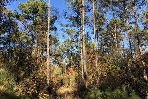 Sofkahatchee Creek Timber and Rec Tract in Elmore, AL (27 of 36)