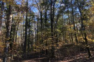 Sofkahatchee Creek Timber and Rec Tract in Elmore, AL (15 of 36)