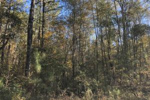 Sofkahatchee Creek Timber and Rec Tract in Elmore, AL (33 of 36)